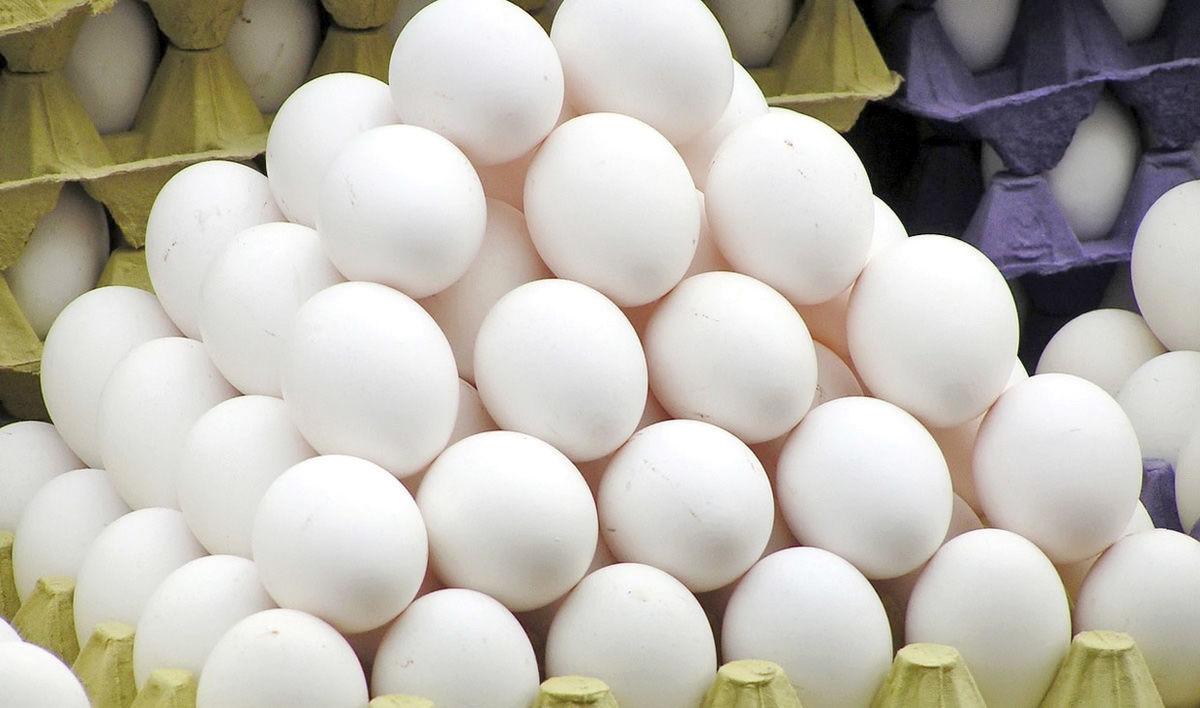قیمت تخم مرغ سر به فلک کشید