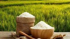 قیمت برنج در شمال پایین آمد  در تهران گران شد!