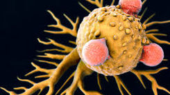 درمان سرطان با لوپرامید؛ داروی ضد اسهال