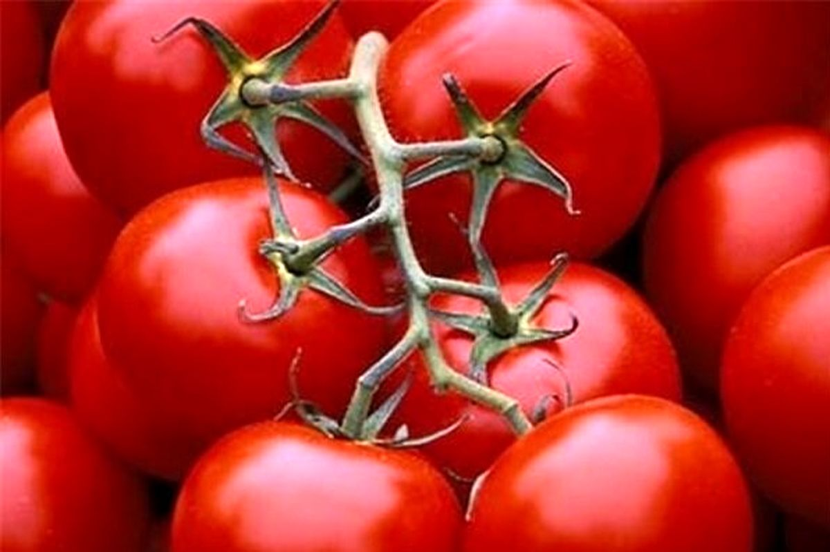 گوجه به عنوان داروی پارکینسون + جزئیات