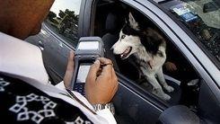 توضیح پلیس درباره برخورد مسلحانه با سگ گردانی + فیلم