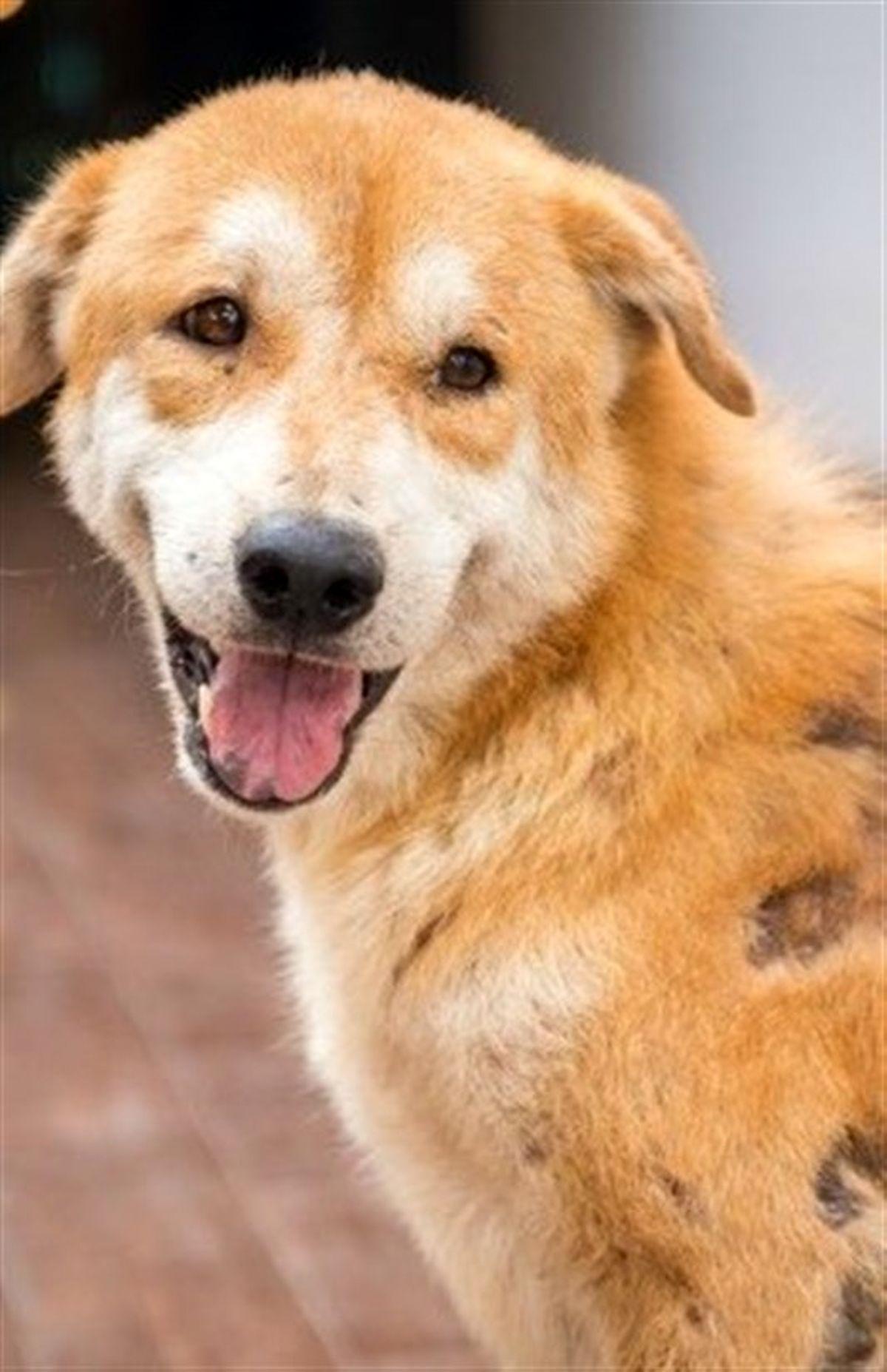 ویروس کرونای جدید توسط سگ ها