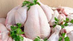 قیمت مرغ در میادین تثبیت شد 18 آذر 99 +جزئیات