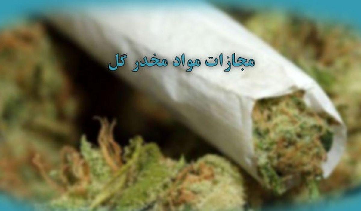 امکان کشت گل در خانهها نیست/ افزایش دستگیری مجرمان گل