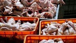 دستور قضایی برای تنظیم بازار مرغ/ بحران  قیمت مرغ قابل کنترل است؟